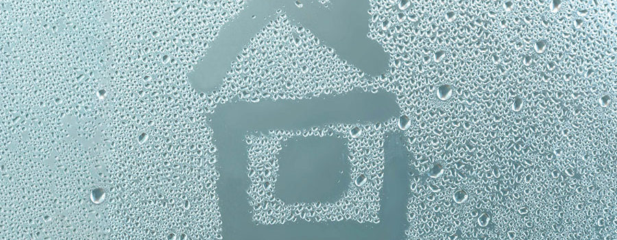 Wilgoć w domu to pleśń i grzyby, które wydzielają mitotyksyny, przyczynę alergii i wielu groźnych chorób, w tym nowotworów.